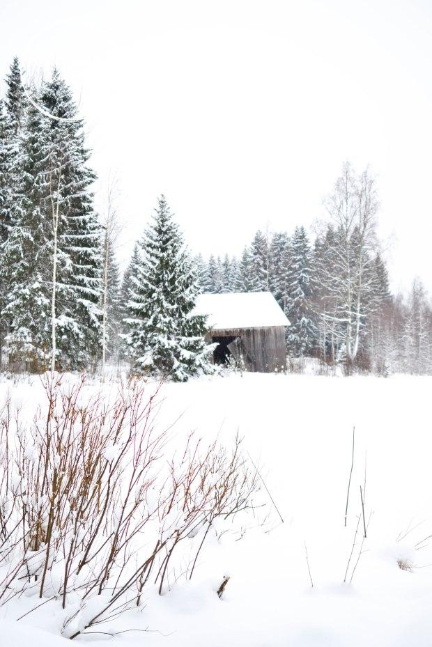 talvi-0475